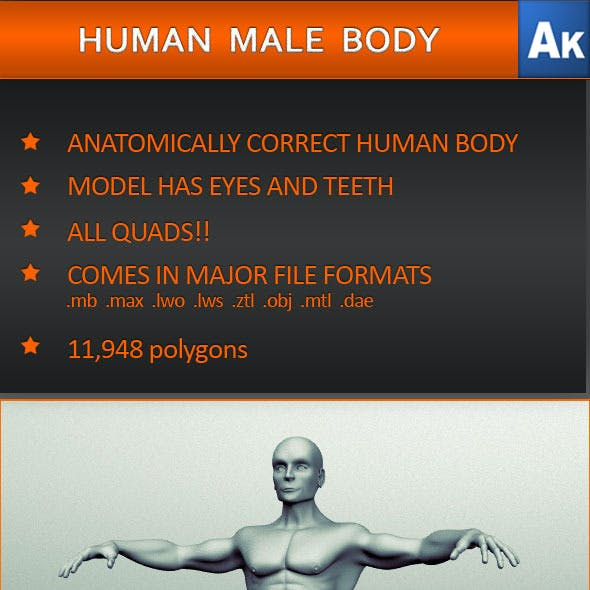 Human Male Body (Anatomically correct)