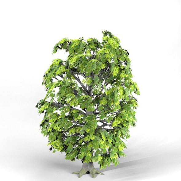Horse Chestnut Tree High Poly - Native Nature 3