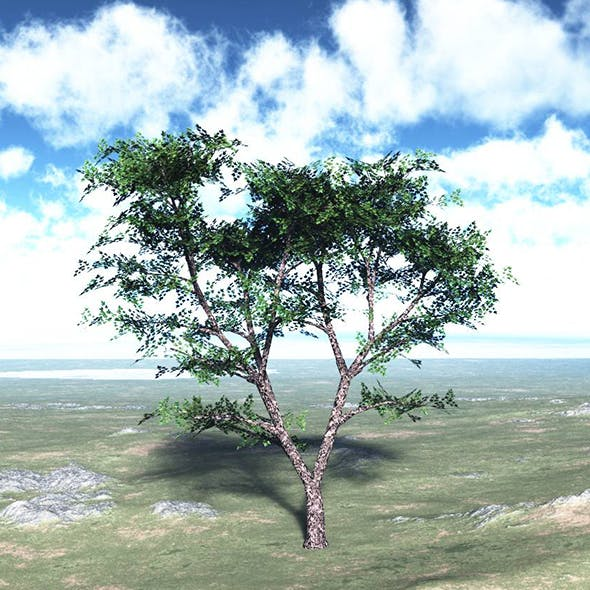Maple Tree High Poly - Native Nature 6