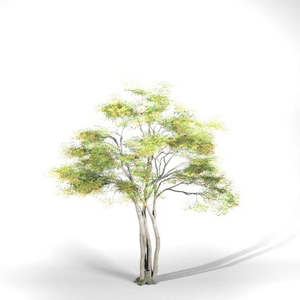 Alder Tree High Poly - Native Nature 9