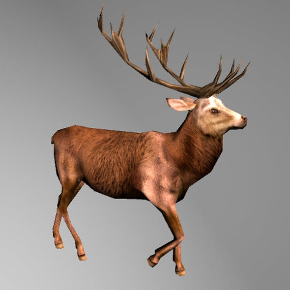 Stag - 3DOcean Item for Sale