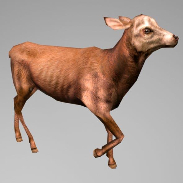 Animated Deer - 3DOcean Item for Sale