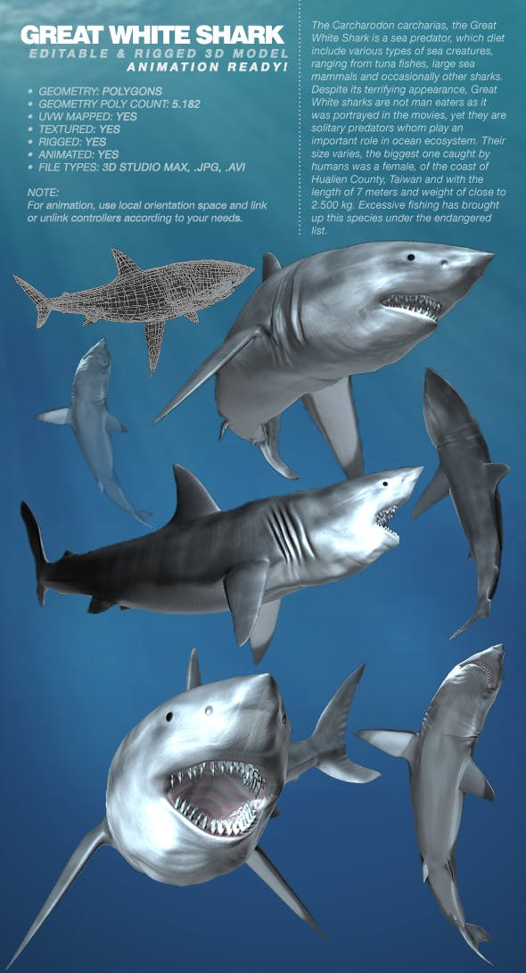 Great White Shark rigged 3Ds model - 3DOcean Item for Sale