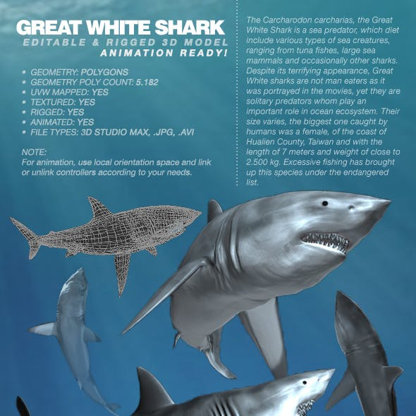 Great White Shark rigged 3Ds model