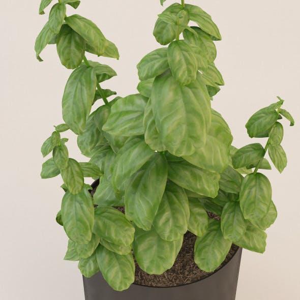 Photorealistic Basil Plant