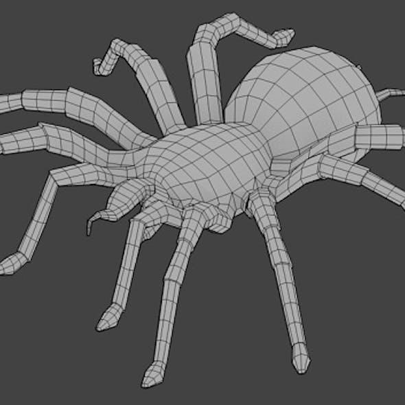 Spider Base Mesh