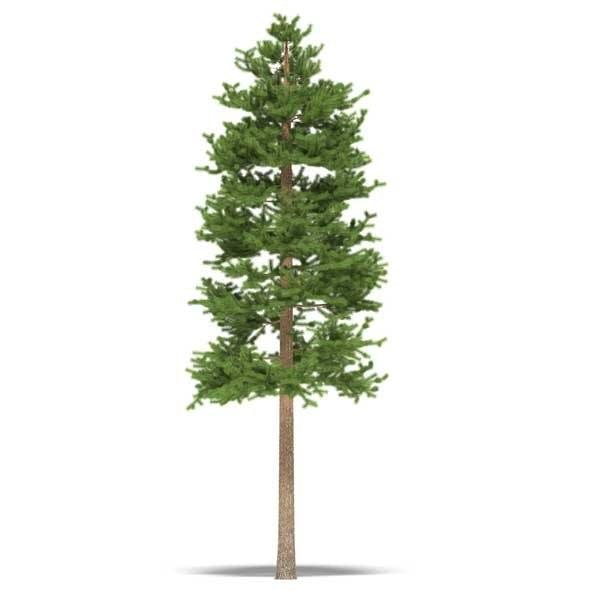 Pine - 3DOcean Item for Sale