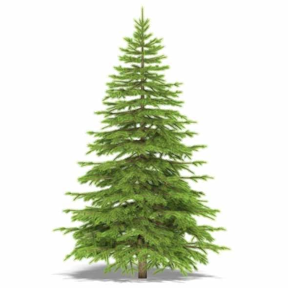Spruce - 3DOcean Item for Sale