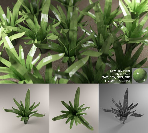 Low Poly Plant with Vray Material - 3DOcean Item for Sale