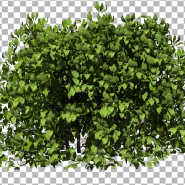 Bushes CG Textures & 3D Models from 3DOcean