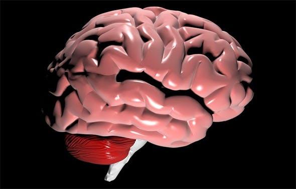 Brain - 3DOcean Item for Sale