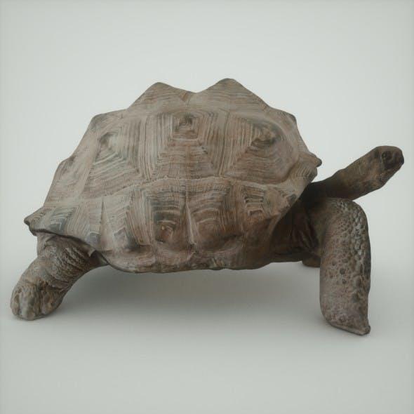 Photorealistic Galapagos Tortoise