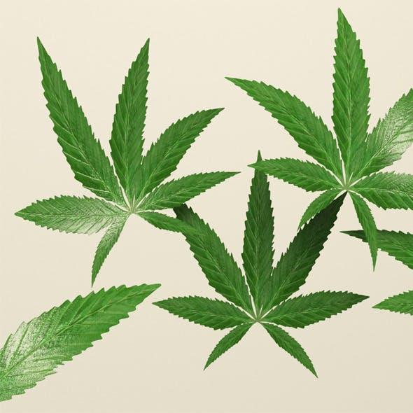 Weed Leafs - 3DOcean Item for Sale