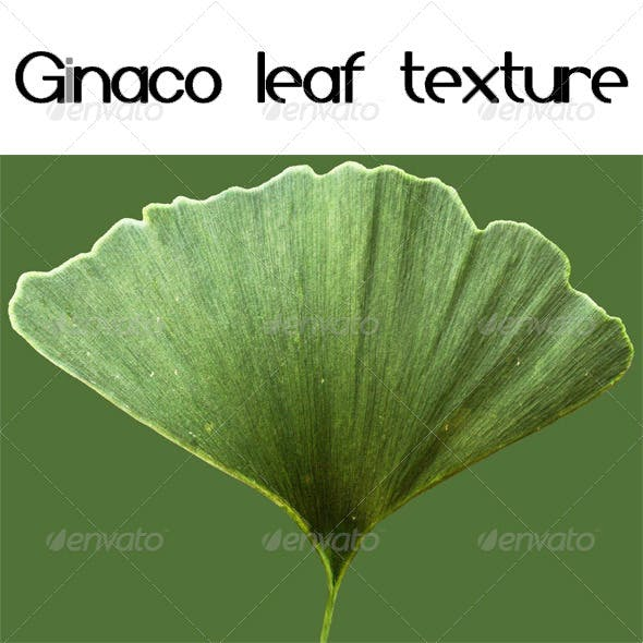 Ginaco Leaf Texture - 3DOcean Item for Sale