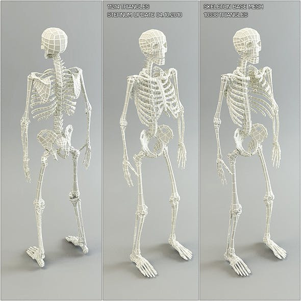 Low Poly Base Mesh Skeleton