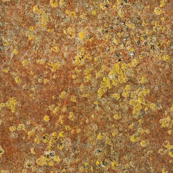 Rusty Metal With Yellow Mold