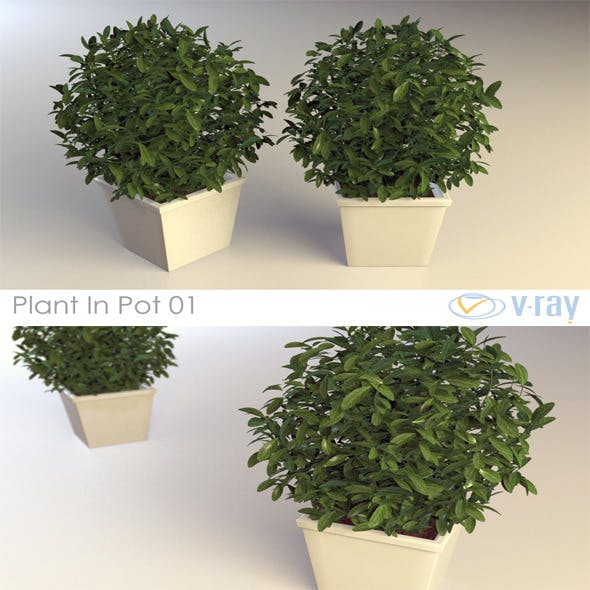 Plant In Pot 01