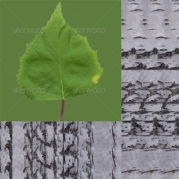 Birch Leaf And Bark - 3DOcean Item for Sale