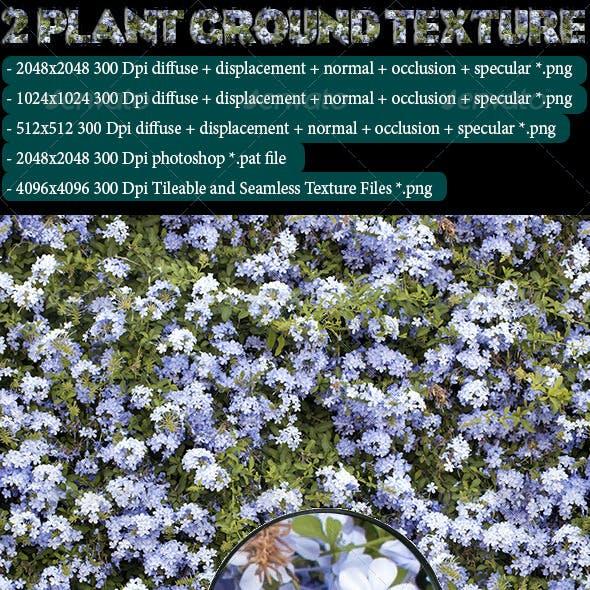2 Plant Ground Texture