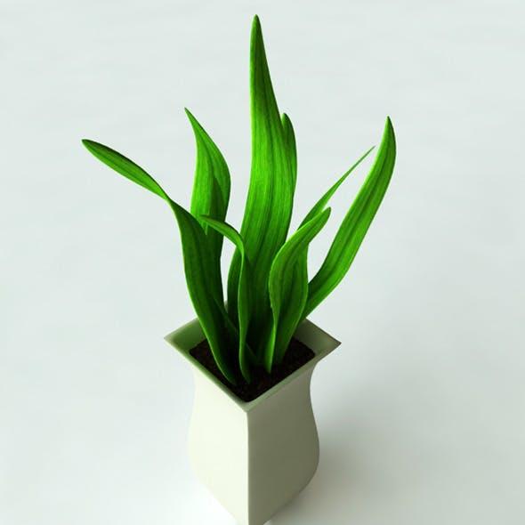 3D Models Potted Plant-2 - 3DOcean Item for Sale
