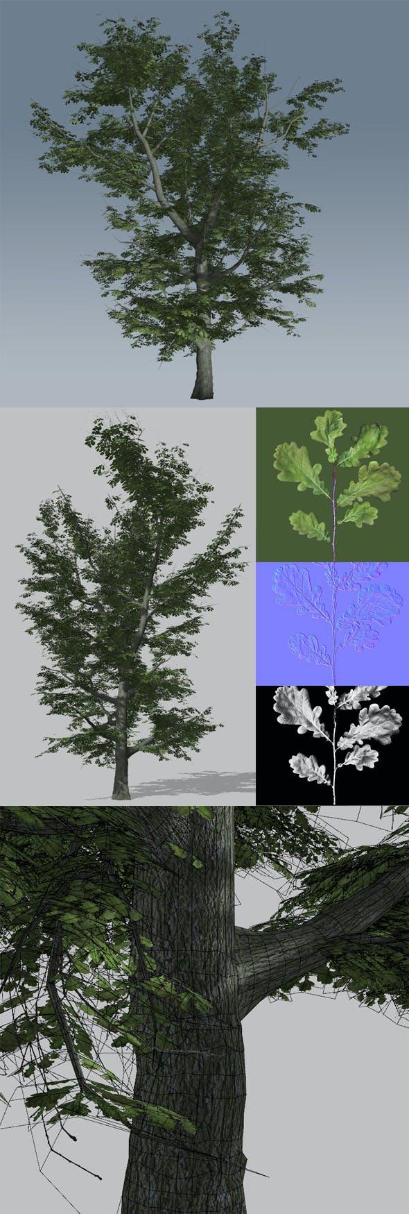 Common Oak 1 - 3DOcean Item for Sale