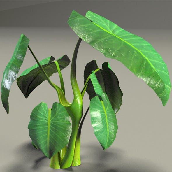 Elephant Ear plant - 3DOcean Item for Sale