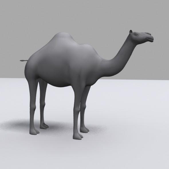3D Camel Model - 3DOcean Item for Sale