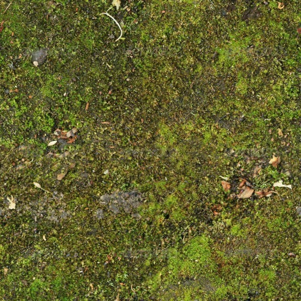 Ground Covered With Moss