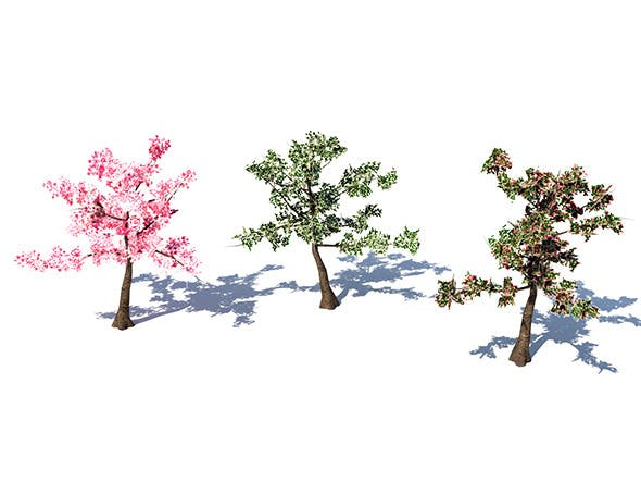 Lowpoly Cherry Tree - 3DOcean Item for Sale