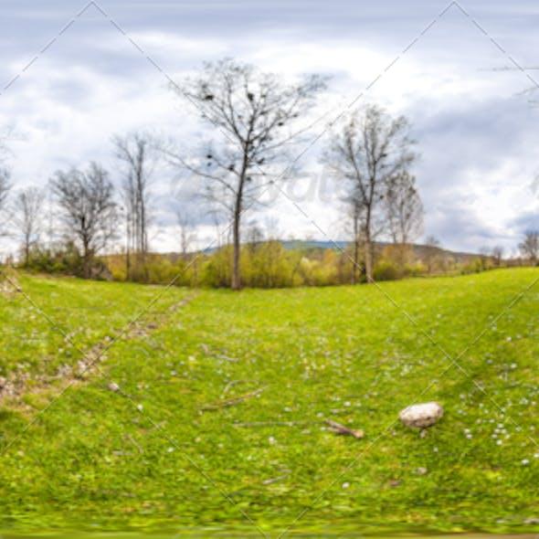 HDRI Tree And Grass Field