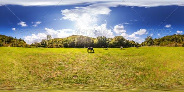 HDRI Grazing Cows Under Blue Sky - 3DOcean Item for Sale