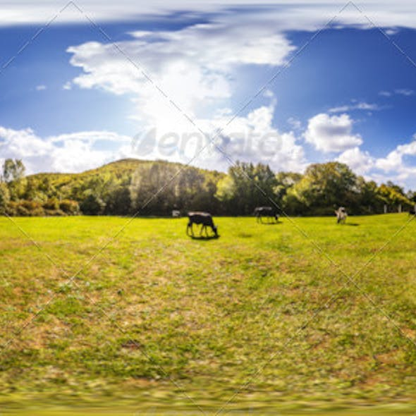 HDRI Grazing Cows Under Blue Sky