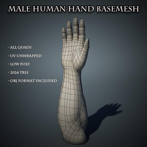 Human Male Hand Base Mesh