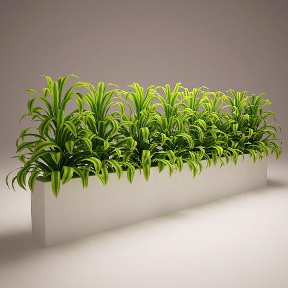 Plant Model D
