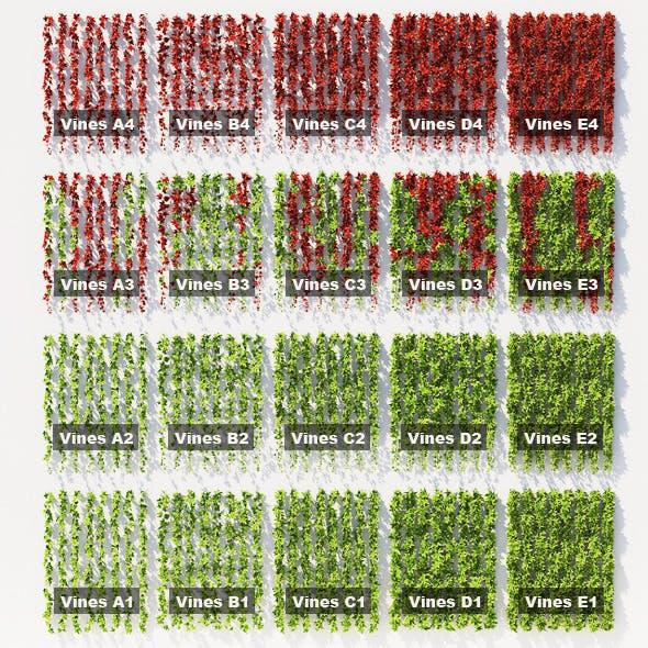 Hanging plants - 20 set - ivy