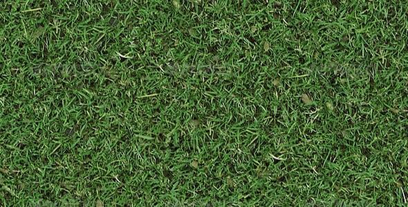 Autumn Tileable Grass - 3DOcean Item for Sale