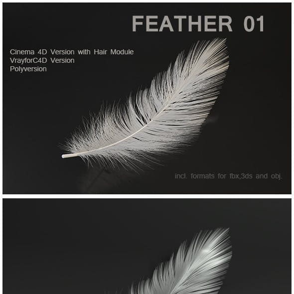 Feather 01