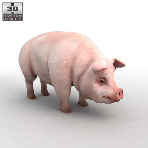 Highly detailed and realistic Pig 3D model