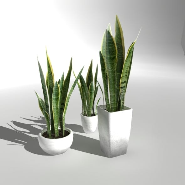 """Low-poly Plant """"Snake Plant"""" - 3DOcean Item for Sale"""