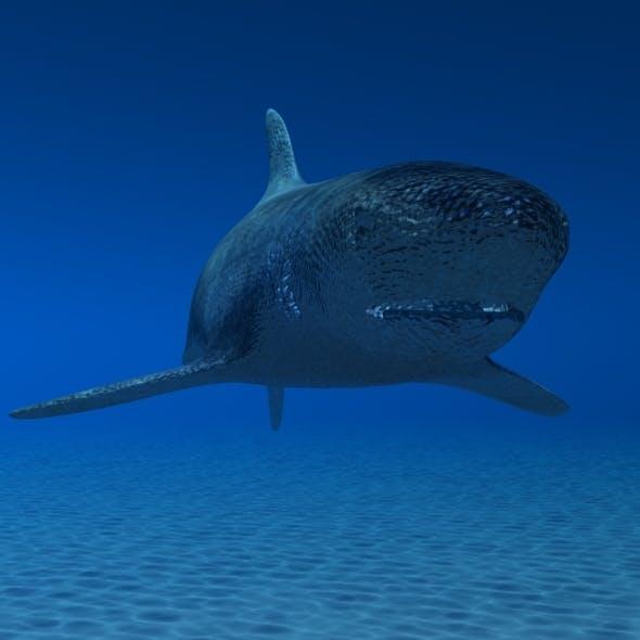 Animated 3D Shark Model - 3DOcean Item for Sale
