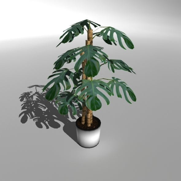 """Low-poly Plant """"Philodendron Deliciosa"""" - 3DOcean Item for Sale"""