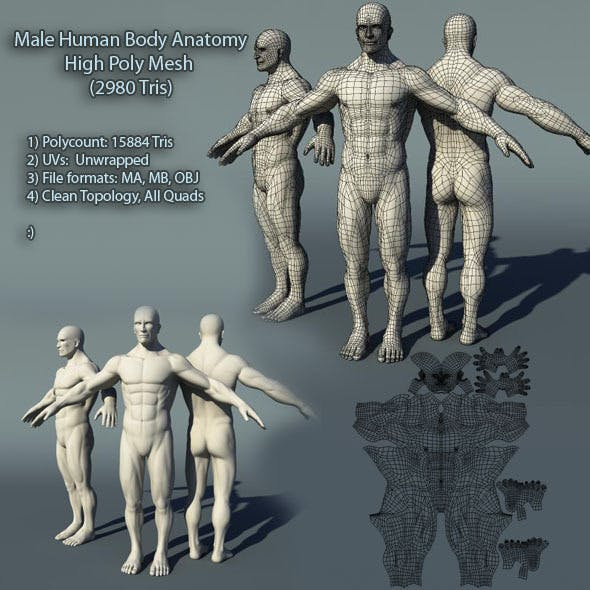 Male Human Body Anatomy High Poly Mesh