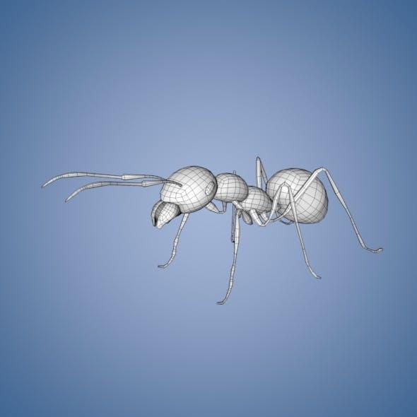 Ant Base Mesh