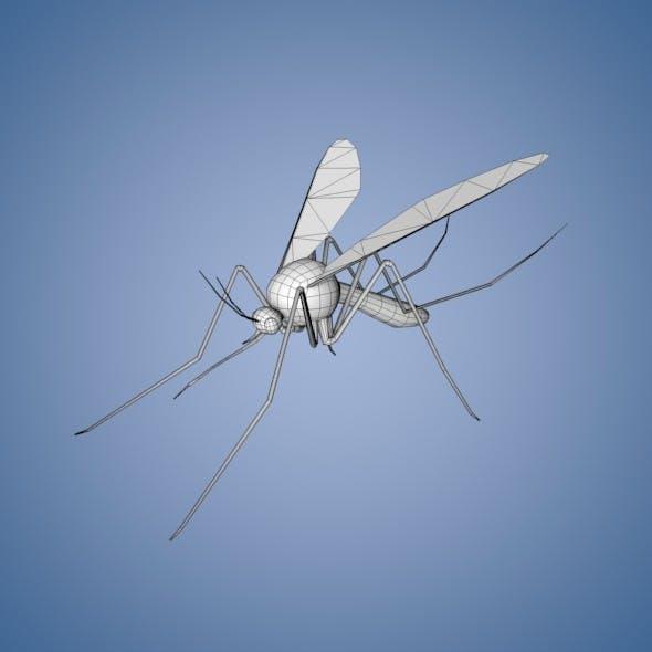Mosquito Base Mesh