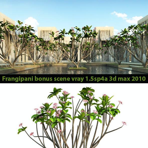 Frangipani Tree v.2