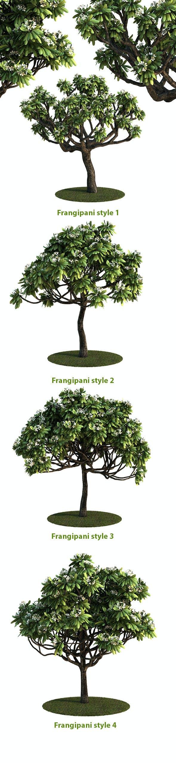 Frangipani Tree v.3 - 3DOcean Item for Sale