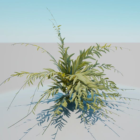 African shrub