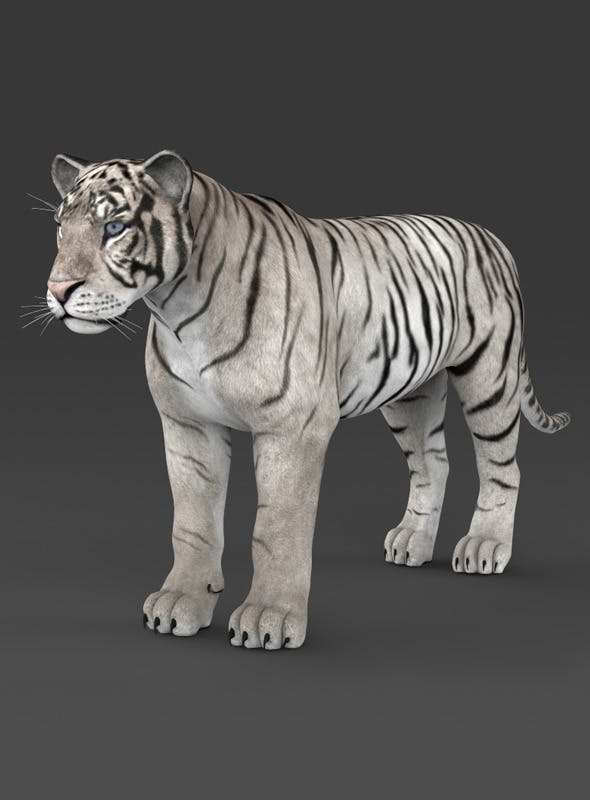 Realistic White Tiger - 3DOcean Item for Sale