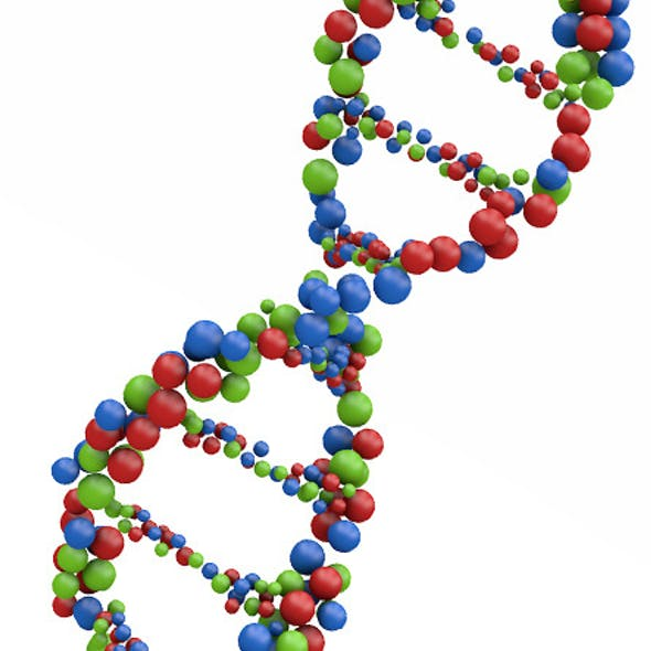 DNA Molecule Structure