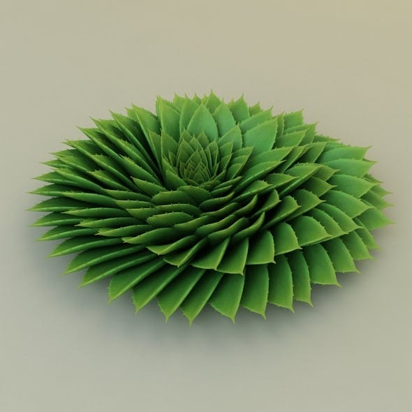 Aloe Rounded